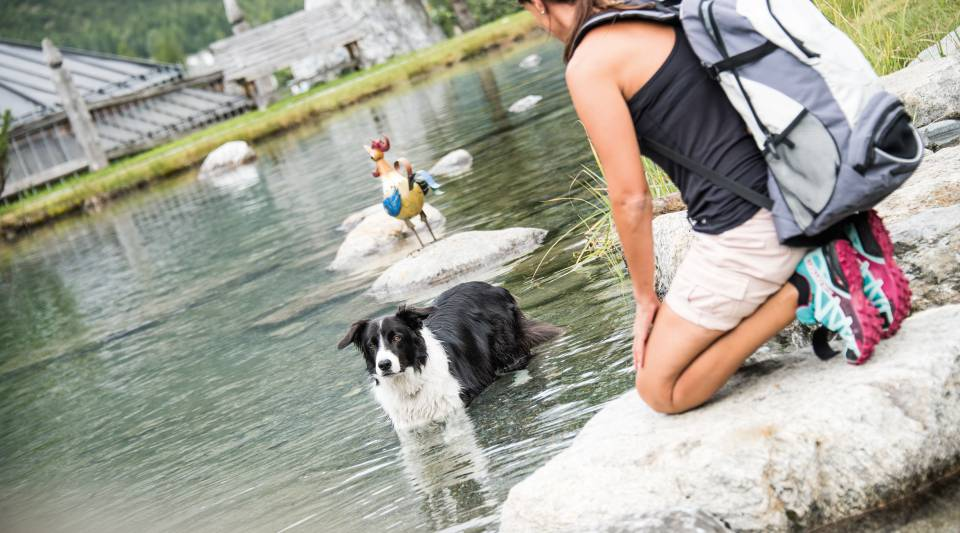 Hund im See in Sulden am Ortler